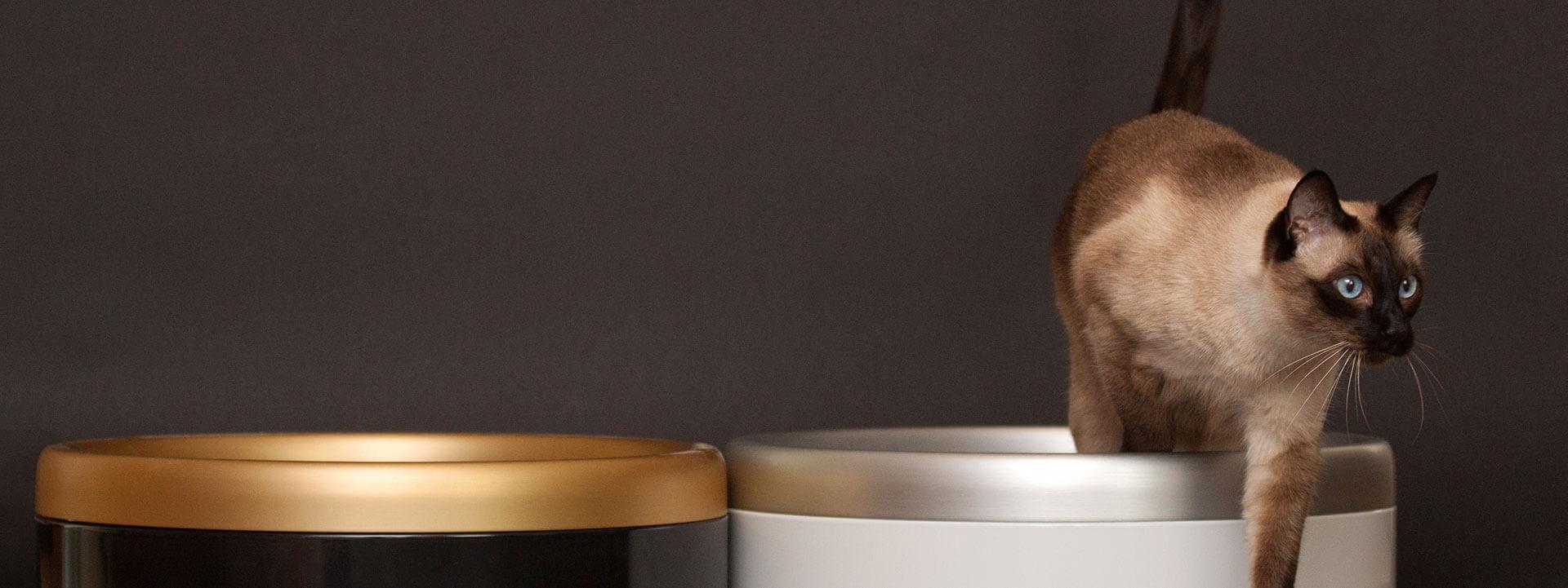 katchit-hygienische-katzentoilette-katzenklo-haendler